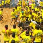 `ஜல்லிக்கட்டில் இப்படி பண்ணுறாங்க' - ஆதங்கப்படும் காளை உரிமையாளர்கள்