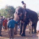 12 குண்டுகள் துளைத்த மக்னா யானை... காசுபார்த்த தொண்டு நிறுவனம்! - ஒரு கும்கி உருவாகும் கதை - அத்தியாயம் 2
