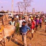 5,000 பார்வையாளர்கள்... அசம்பாவிதம் இல்லாமல் முடிந்த மெகா ஜல்லிக்கட்டு!