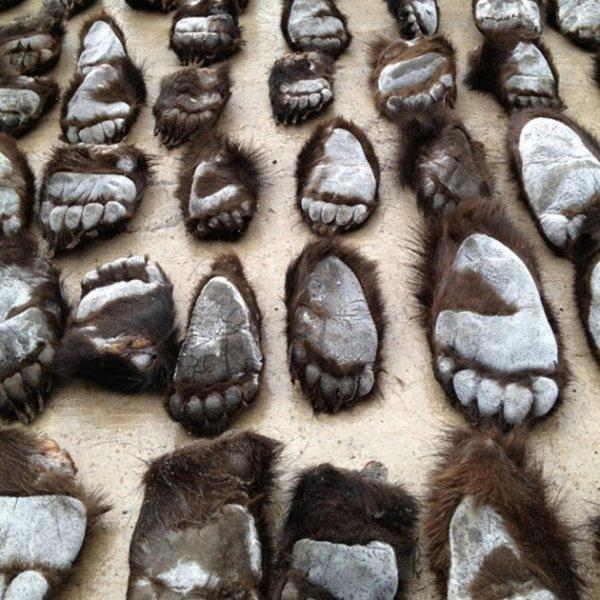 கொல்லப்படும் கரடிகள்... கடத்தப்படும் குட்டிகள்... ஒரு துயரஅத்தியாயம்! #AnimalTrafficking அத்தியாயம் 13