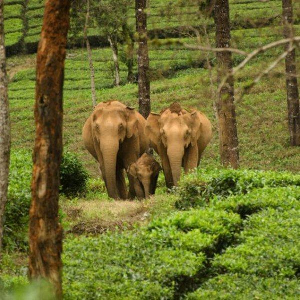 வனப்பரப்பு அதிகரித்திருப்பது உண்மைதான்... ஆனால் கானுயிர் வளாகங்களின் நிலை என்ன? #WildlifeCorridor