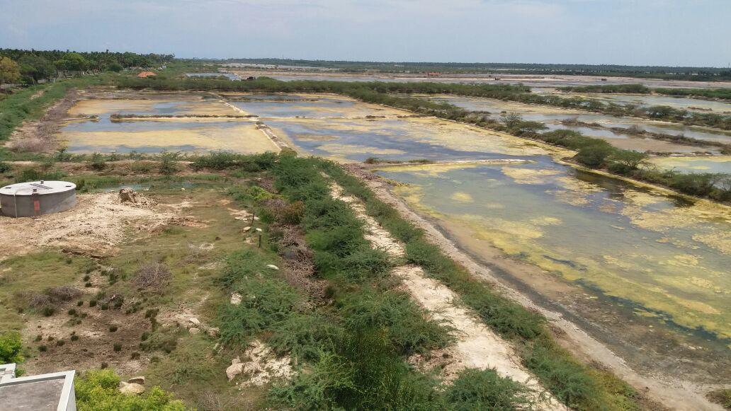 சாமித்தோப்பு உப்பளம் பகுதி