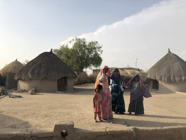 பாலைவன ஆடுகள் - பாகிஸ்தான்
