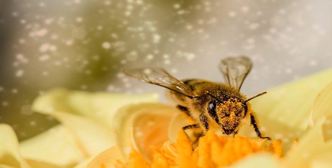 மனித இனத்தையே இல்லாமல் செய்ய வல்ல தேனீக்களின் அழிவு..! #HoneyBee