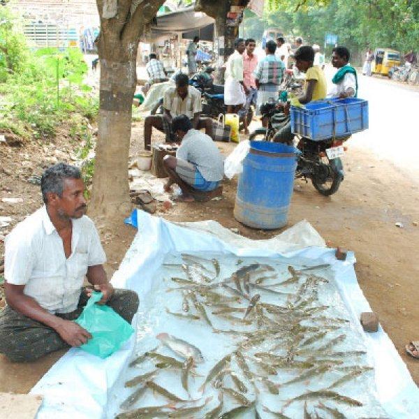 `இங்கே மீன் விற்கத் தடை' - மன்னார்குடியில் விநோத கட்டுப்பாடு