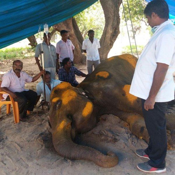 காசநோய் முதல் கருணைக்கொலை வரை... யானை ராஜேஸ்வரிக்கு நடந்தது என்ன?
