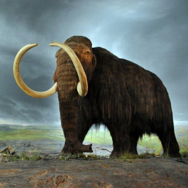 நிஜத்தில் ஒரு ஜுராசிக் பார்க் முயற்சி... மீண்டும் உயிர்த்தெழுமா மாமூத்? #Mammoth