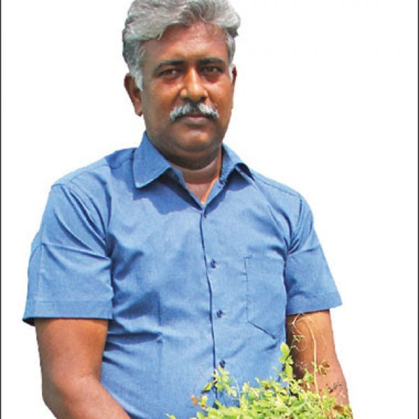 Awareness of Terrace Garden with free country seeds..!