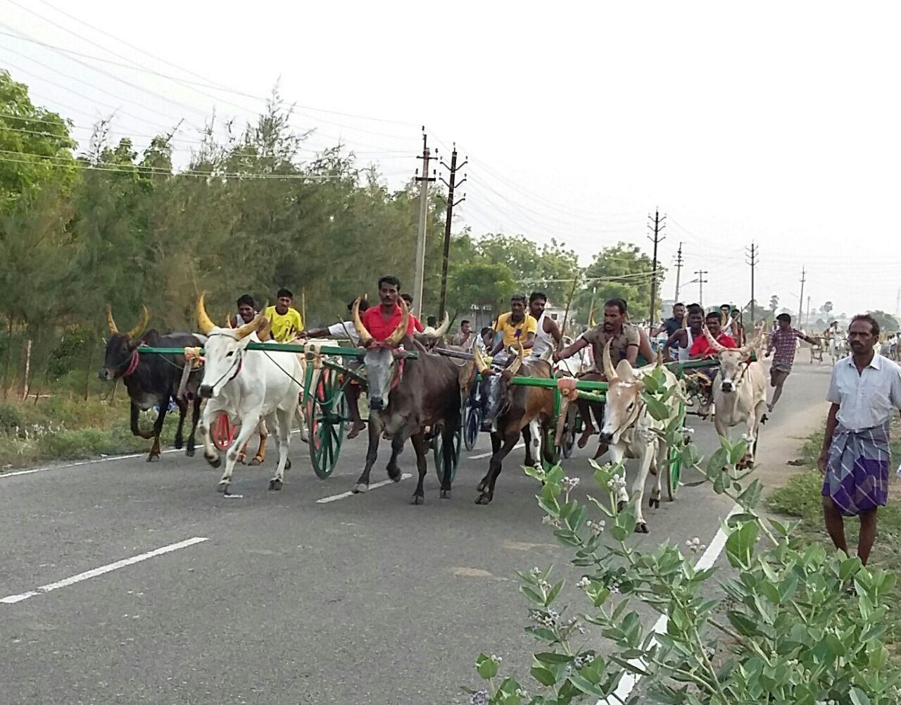 bulleck cart race