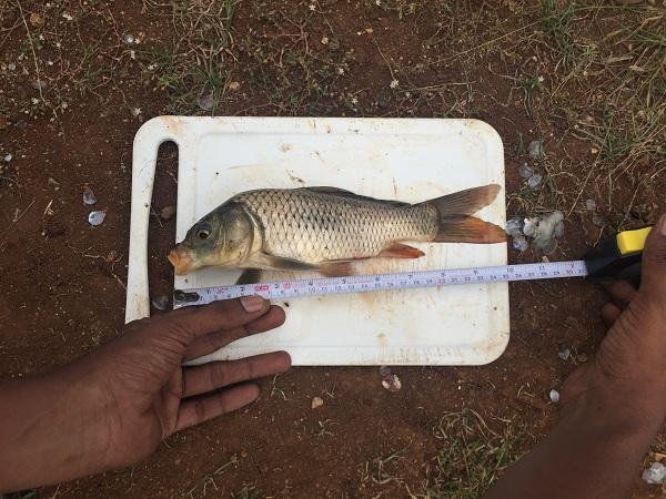 Mercury contaminated fish