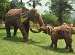 'நம்பும் வகையில் இல்லை'- சுற்றுலாப் பயணிகளை ஏமாற்றமடையவைத்த குன்னூர் பழக் கண்காட்சி