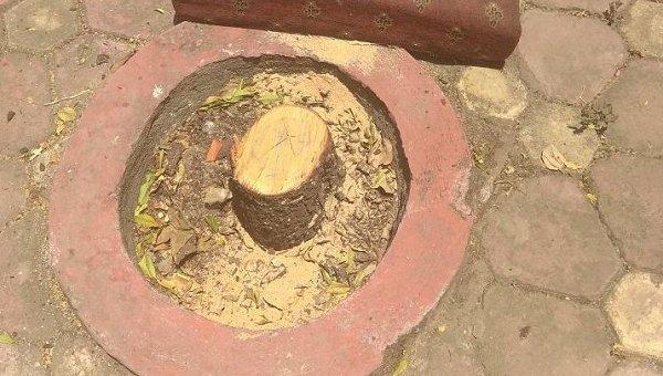 ஆளுநர் மாளிகையில் மாயமான சந்தன மரங்கள்! வித்யாசாகர் ராவ் அதிர்ச்சி