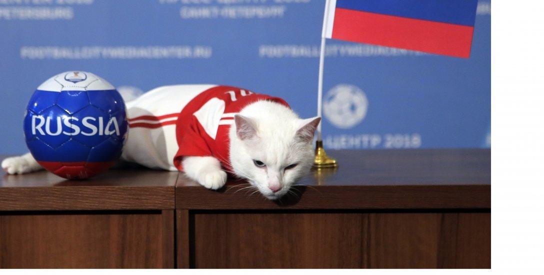 ஆக்டோபஸ் பழசு... அக்கிலெஸ் புதுசு... உலகக் கோப்பையைக் கணிக்கும் அதிசயப் பூனை! #WorldCup