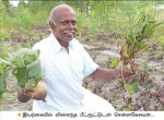₹80,000 from 1.25 acres... Substantial returns from beetroot as an inter-crop!