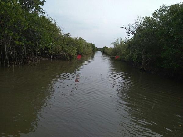 பிச்சாவரம் சுற்றுலா