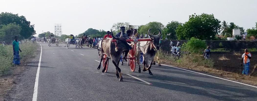 ரேக்ளா போட்டி