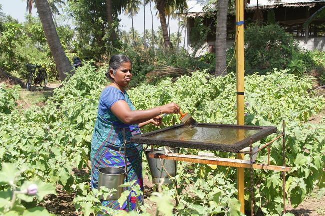 இயற்கை முறையில் கத்தரி சாகுப்டி செய்யும் அமுதா
