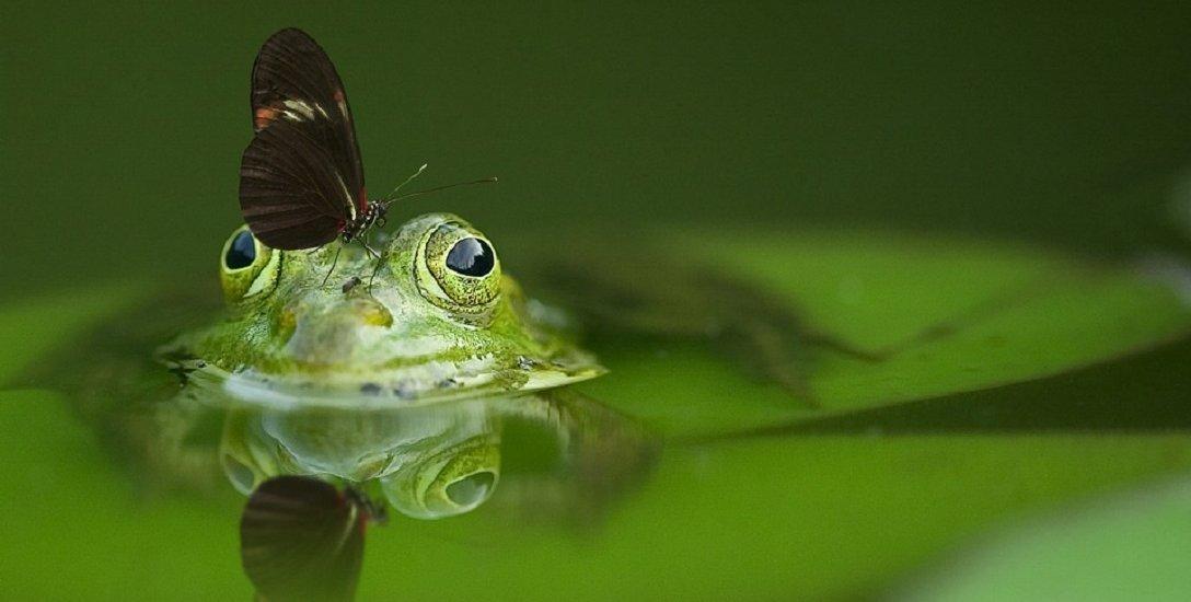 மனிதன் ஆயுள் அதிகரித்திருக்கிறது... ஆனால் மற்ற உயிரினங்கள்?