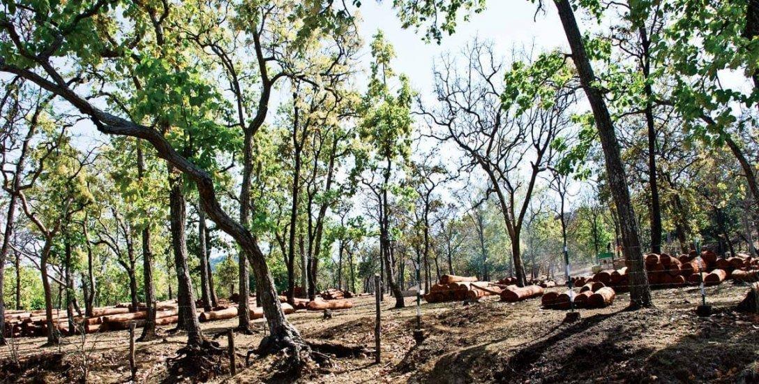 30 வருடங்களில் தொழிற்சாலைகளான 14,000 சதுர கி.மீ இந்தியக் காடுகள்!
