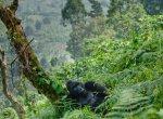 யுனெஸ்கோ பாரம்பர்ய தலத்தையும் விடாத எண்ணெய் நிறுவனங்கள்... பலியாகும் காங்கோ தேசியப் பூங்கா!