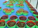 குறைந்த விலை நிழல்வலைக்குடில், நாட்டு விதைகள்... இப்படி அமைக்கணும் மாடித்தோட்டம்