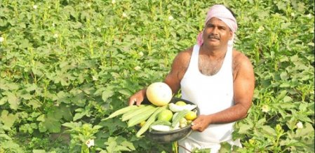 6 lakh income from paddy, coconut & vegetables... Significant Income from Mixed Cropping!