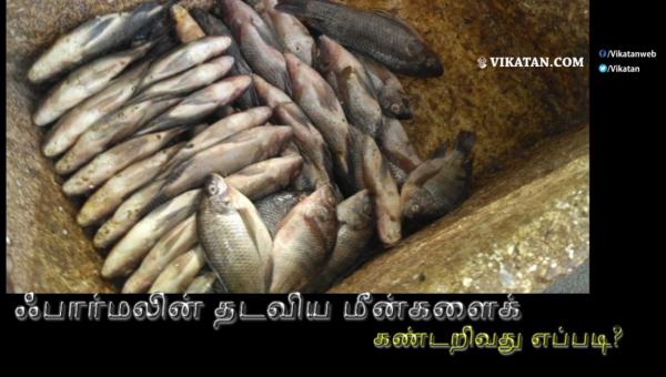 ஃபார்மலின் தடவிய மீன்களைக் கண்டறிவது எப்படி? உணவுப் பாதுகாப்புத் துறை விளக்கம்! #FormalinLacedFish