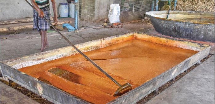 Substantial return of ₹1,75,000 per acre from jaggery production in the farm itself..!