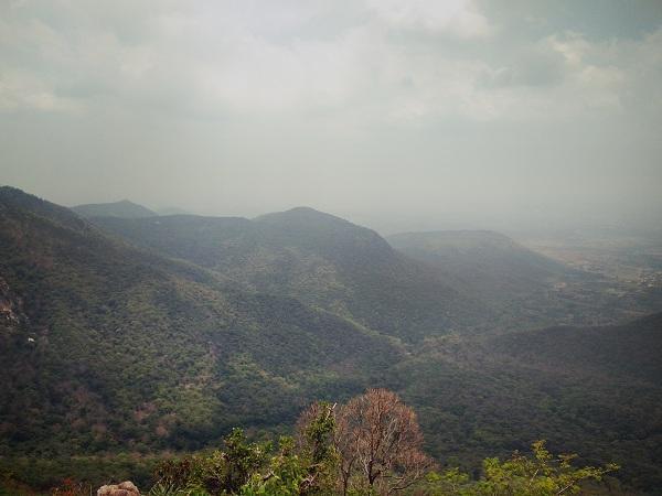 மலைக்காடு