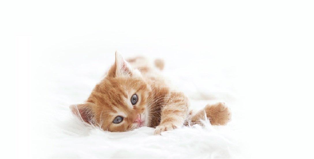 டாம் அண்ட் ஜெர்ரி முதல் பீஸ்ட் வரை... இணையத்தை கலக்கும் இன்ஸ்டா பூனைகள்! #CatDay