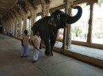 காலை, மாலை நடைப்பயிற்சி;150 கிலோ எடை குறைப்பு - 6 மாதங்களில் 'ஸ்லிம்' ஆன காந்திமதி!