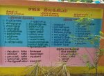 சுவர் ஓவியமான சங்க இலக்கியங்கள்:  ஆசிரியரின் புது முயற்சி