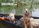 கேரளா வெள்ளத்தில் சிக்கிய விலங்குகள்... காப்பாற்றக் களமிறங்கிய சென்னை இளைஞர்கள்! #KeralaFloods