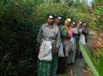 வழக்கத்தைவிடக் கூடுதல் சம்பளம்... நடுராத்திரியில் அரளிப்பூ பறிக்கும் பெண்கள்