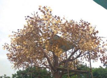 ''ஒரு வைஃபை மரம் 21 லட்சம்... மொத்தம் 25 மரங்கள்!'' - கோவை ஸ்மார்ட் சிட்டி பரிதாபங்கள்