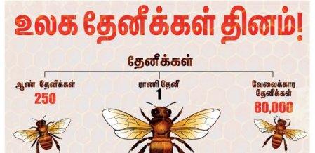 கலப்படத் தேனைக் கண்டுபிடிப்பது எப்படி... வீட்டிலே தேனீ வளர்க்கும் எளியமுறை! #HoneyBeeDay
