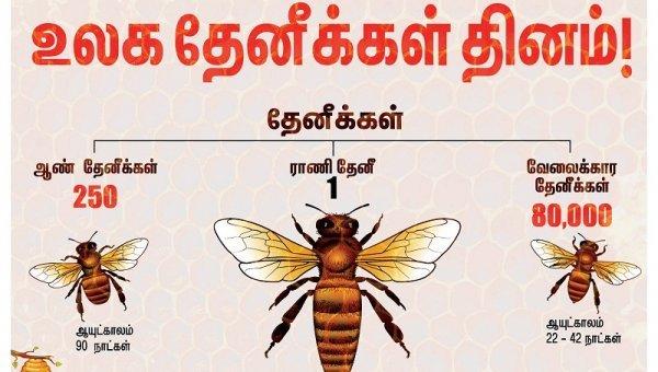 கலப்படத் தேனைக் கண்டுபிடிப்பது எப்படி... வீட்டிலே தேன் வளர்க்கும் எளியமுறை! #HoneyBeeDay
