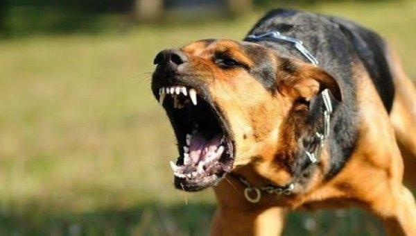 ரேபிஸால் பாதித்த நாய் கடித்தால் மட்டுமல்ல, நக்கினாலும் வறண்டினாலும் ரேபிஸ் பாதிக்கலாம்! #Alert
