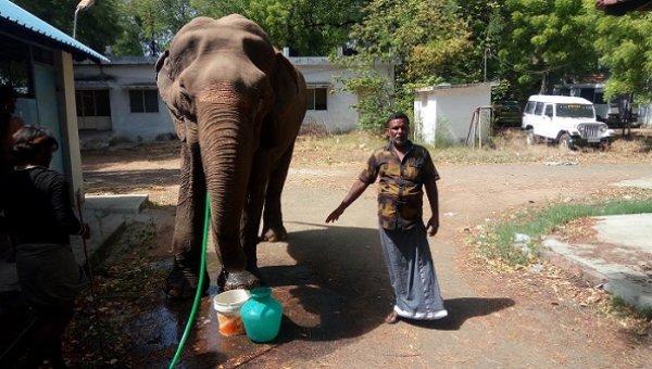 """``சுந்தரி யானை இல்லை... என் தாய்!"""" - நோயால் வாடும் 85 வயது யானையும் அதன் பாகனும்"""