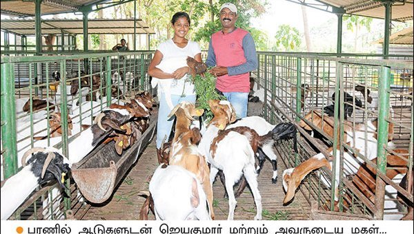 Wonderful Profit by Goat Rearing... 160 goats, Rs 17 lakhs per annum!