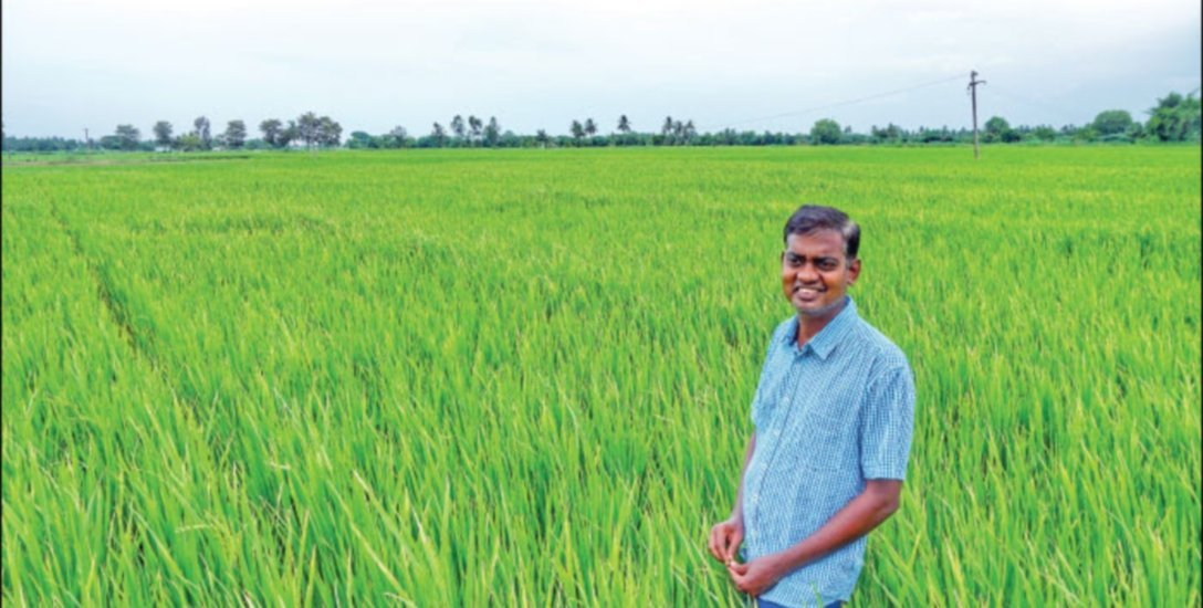 3 Acres, 130 Days, Rs 1,60,000 Income … Holiday Farmer's Organic Cultivation!