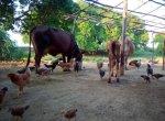 1 ஏக்கரில் 1,65,000 ரூபாய் வருமானம்... மீன், கோழி வளர்ப்பில் அசத்தும் விழுப்புரம் இளைஞர்!
