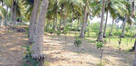 `க்ரின் நீடா!' - சுற்றுச்சூழலைக் காக்க நீடாமங்கலம் மக்களின் புதிய முயற்சி