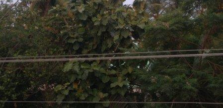 'இறந்தவரின் சடலத்தைக் கொண்டு செல்ல முடியாமல் அவதிப்பட்டோம்' - உயர் மின்னழுத்தக் கம்பியால் அவதிப்படும் கிராம மக்கள்
