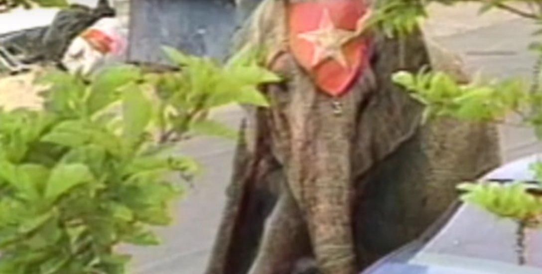 86 குண்டுகள் வீழ்த்திய `டைக்' யானை... நினைவில் காடிருந்த மிருகத்தின் நிஜக்கதை!