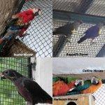வண்டலூர் உயிரியல் பூங்காவில் புதிய 7 வெளிநாட்டு பறவையினங்கள்!