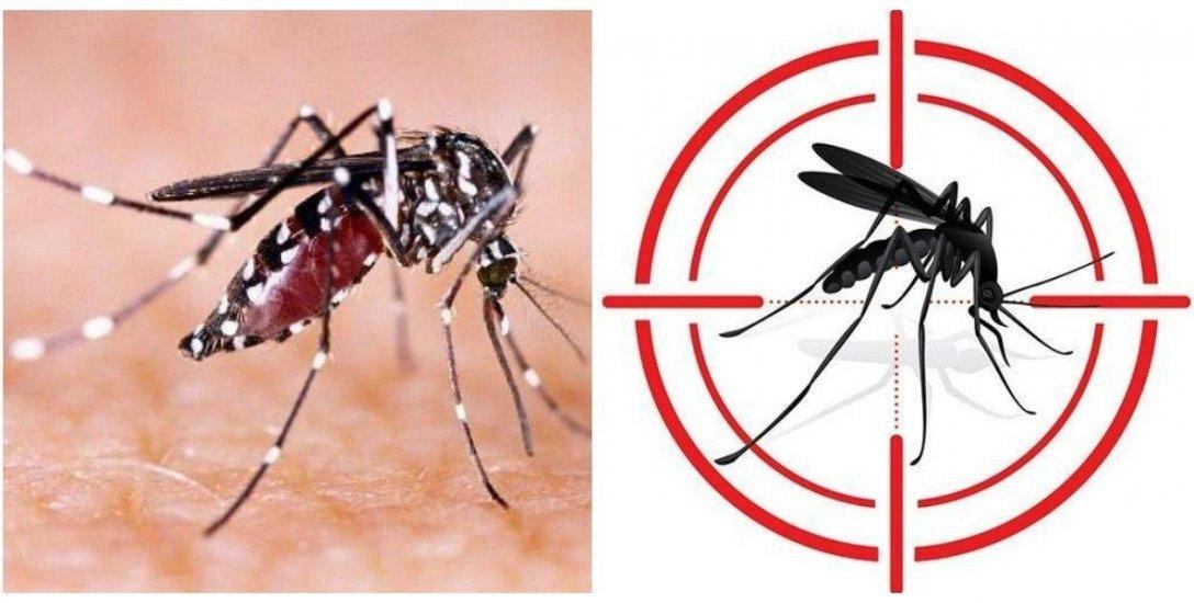 டெங்கு காய்ச்சலை அடையாளம் காட்டும் அறிகுறிகள்! #Dengue
