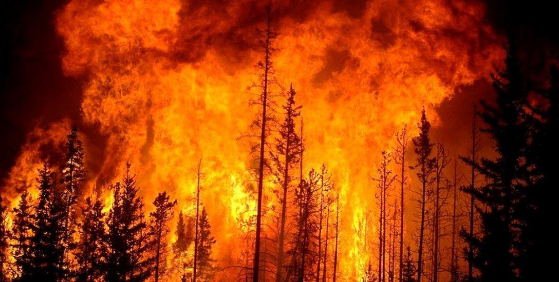 காவு வாங்க காத்திருக்கும் காட்டுத்தீ... தமிழக காடுகளின் பேரபாயம்! #Wildfire