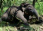 மின்சாரம் தாக்கி யானைகள் உயிரிழப்பு - அறிக்கை கேட்கும் உயர்நீதிமன்றம்