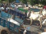 `300 குடும்பங்களின் கதறல் உங்கள் காதில் விழவில்லையா?' - மாட்டு வண்டித் தொழிலாளர்கள் கண்ணீர்